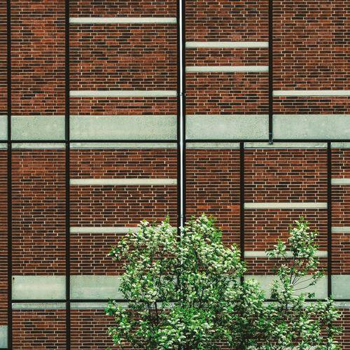 Architectural Detail Architecture Architecturelovers Brick Brick Wall Bricks Clean Minimal Minimalistic Minimlism Tree Wall