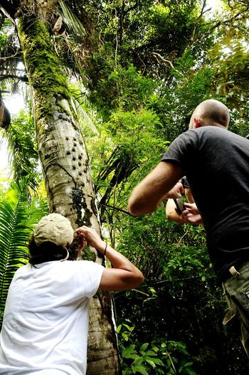 People Taking Pictures of Bats on Tree Bark Cano Negra Costa Rica (c) 2015 Shangita Bose All Rights Reserved Snbcr Nature's Diversities Adventure Club