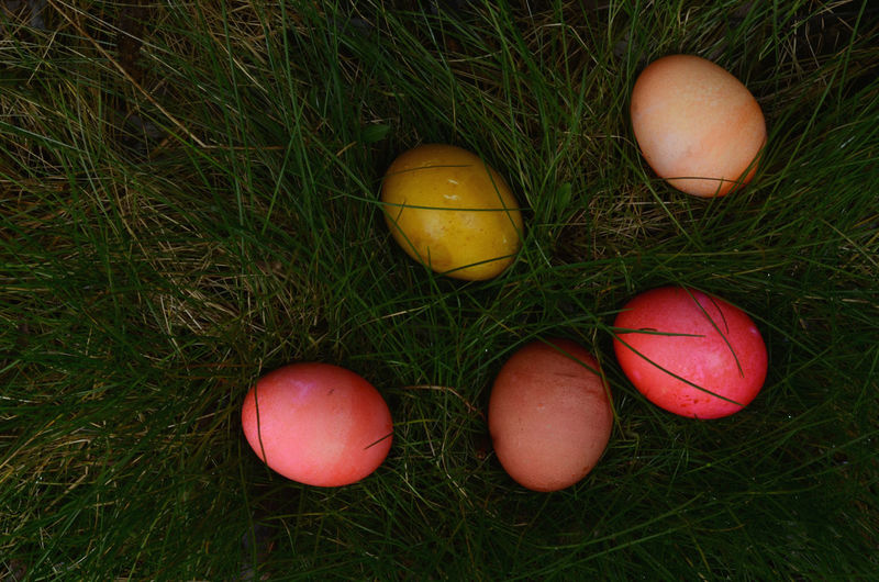 Directly above shot of multi colored easter eggs in grass