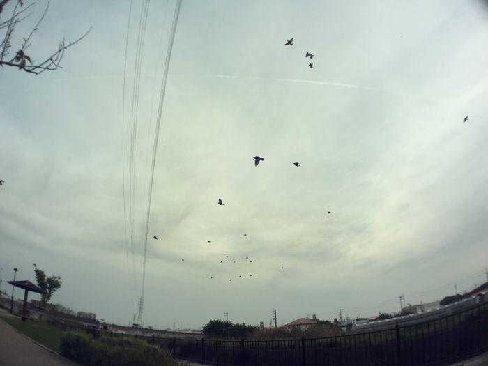 こっちの方がキレイに撮れてたかも 鳥 Birds 空 Sky 電線 Electric Wires