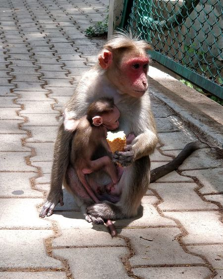 Living Beings Monkey Ice Cream Nature Motherhood In Nature Parenting Love Caring