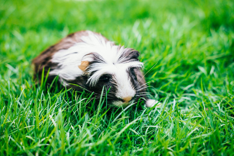 Close-up of a dog on grass