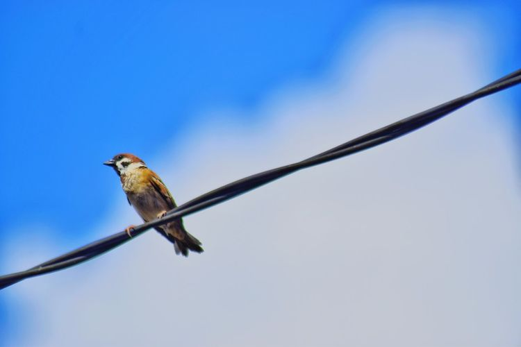 Low angle view of bird perching against clear blue sky