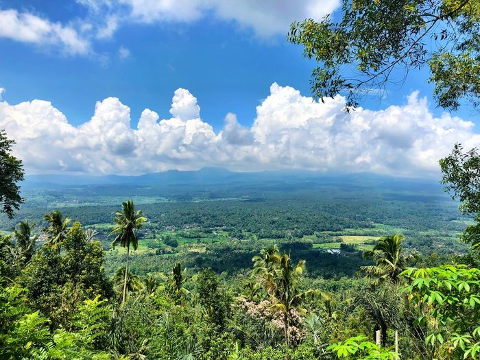 Eyem Best Shots Nature_collection Eyem Best Shots Jungle Sky And Clouds Nature Tree Beauty In Nature Tranquility Sky Tranquil Scene Growth Scenics Day Cloud - Sky No People Green Color Outdoors Landscape Plant Forest Mountain