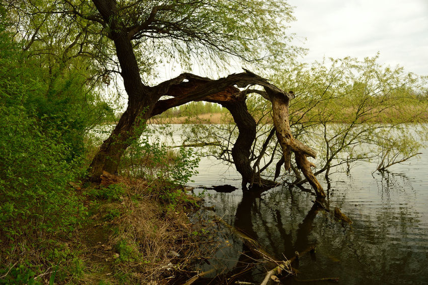 Beauty In Nature Lone Nature No People Outdoors Tranquil Scene Tranquility Tree Tree Trunk Water