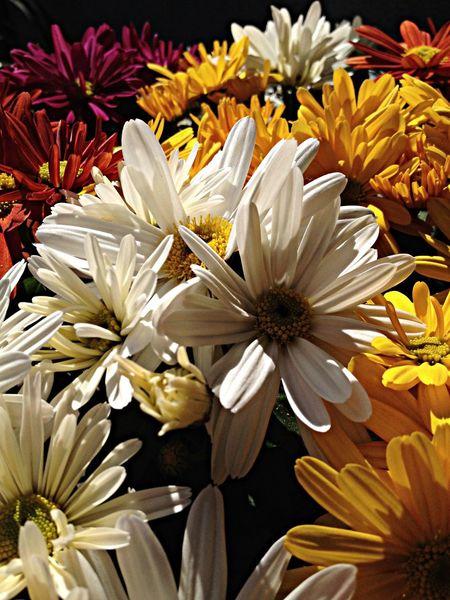 Blumen im garten Flowers Nature