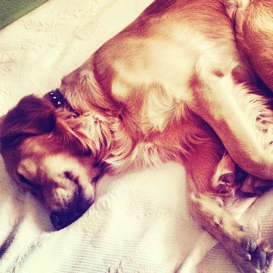 #dog #ilovemydog #love #sleep
