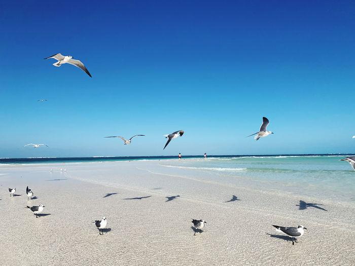 Flock of seagulls flying over beach