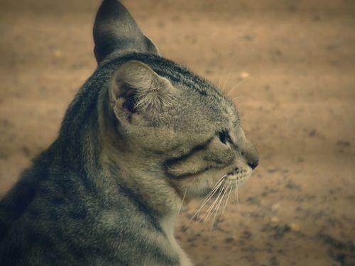 Cat... Cat♡ Paraguay Pet