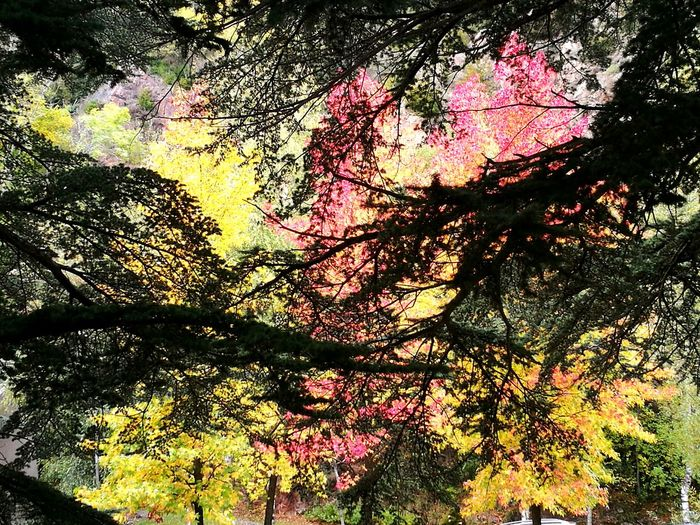 Tree Outdoors Day Backgrounds Growth Full Frame Nature Autumn