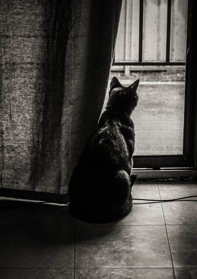 Pet Photography  Pets Cats Black And White A6000