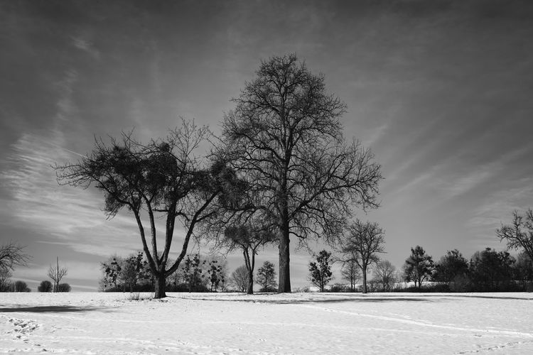 Trees on field against sky during winter