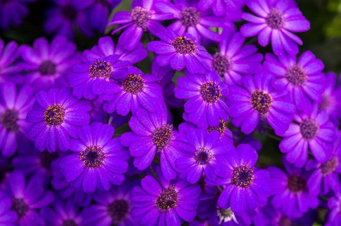 Brussel Bruxelles Brussels Serres De Laeken (Brussels). Greenhouse Flowerporn Flowers Purple