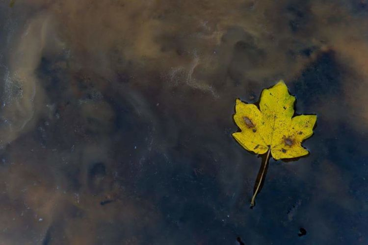 High angle view of flower floating on water
