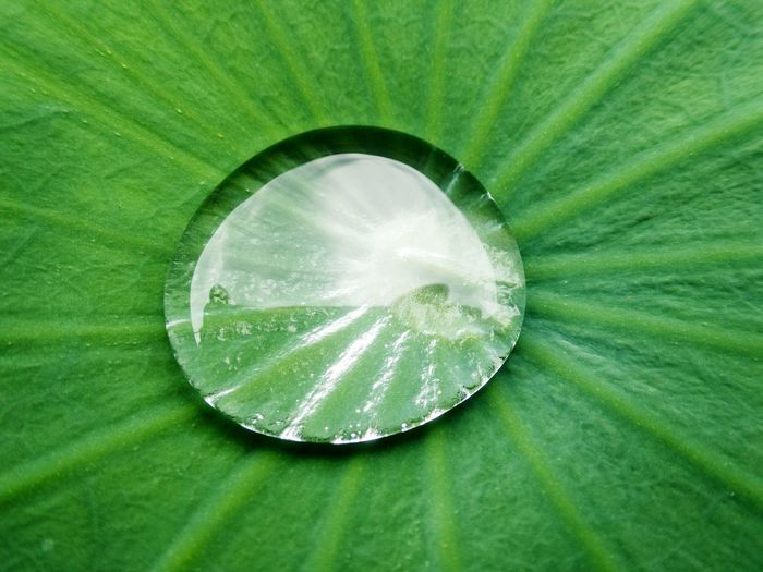 Green Color Close-up No People Circle Backgrounds Nature Day Outdoors Freshness Lotus Lotus Leaf Water Drop