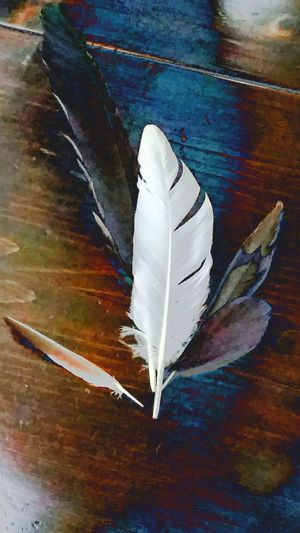 feathers Feathers♡ Plumage Shapes Minimalism Photography Souvenirs