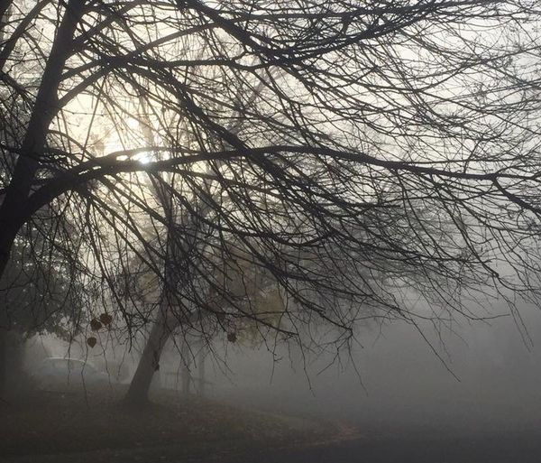 4th version of the same photo. Trying to crop to perfection. IPSWeather Fog Foggy Morning Foggy IPS2015Trees IPS2016Nature