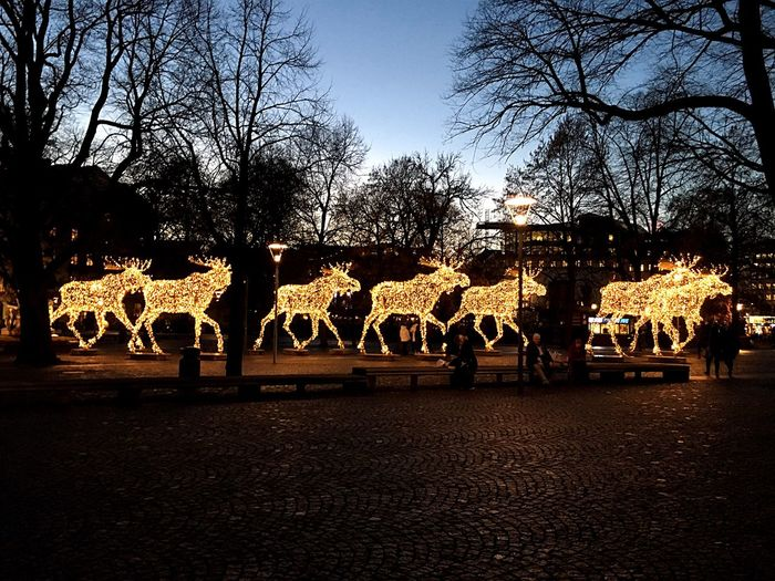 """Moose train"" Moose Mooses Light Animal Figures Stockholm Trees And Sky Buildings Sky Trees Godaminnen"