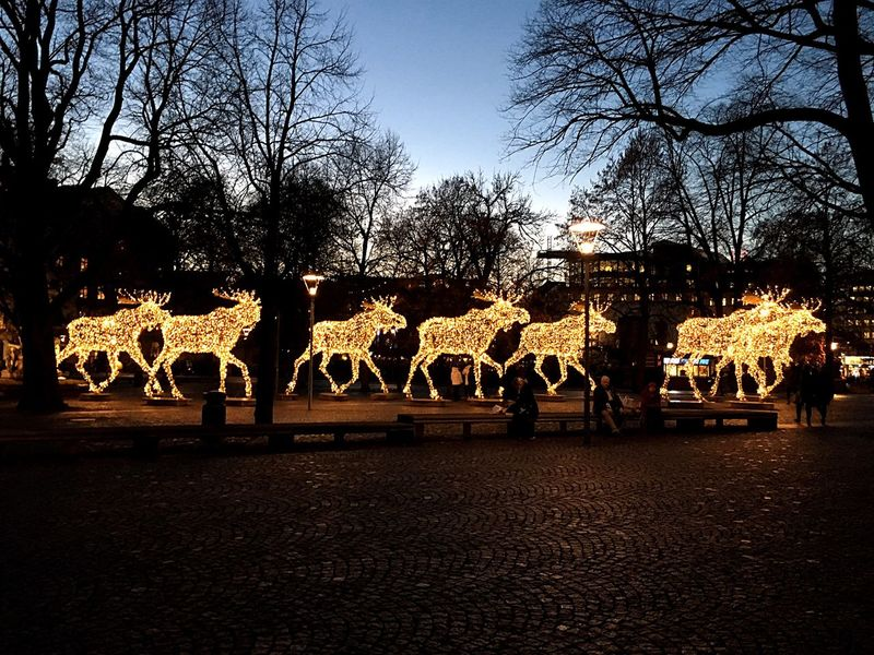 """Moose train"" Moose Mooses Light Animal Figures Stockholm Trees And Sky Buildings Sky Trees Godaminnen"