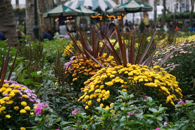 Bryant Park Bryant Park NYC Bryant Park  NY NYC NYC Photography New York New York City Yellow Flower Beauty In Nature Blooming Bryantpark Close-up Day Flower Flower Head Flower Market Fragility Freshness Growth Nature No People Outdoors Park Plant Yellow