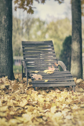 Old wooden chaise lounge among fallen autumn leaves. Atmospheric vintage landscape, relax, nostalgia concept Tree Bench Nature Autumn Plant Seat Day Park Leaf Outdoors Land Leaves Change Tree Trunk No People Park Bench Falling Candid Photography Old Wooden Chair Chaise Lounge Lounge Chair Autumn