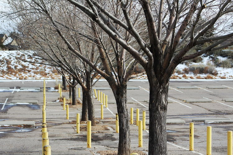 Branch Day Lined Up Lined Up In A Row Outdoors Park Parking Lot Parking Space Pattern Pieces Perspective Posts Snow Tree Tree Trunk Winter