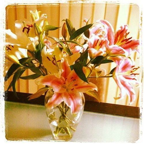 Colour Of Life Lilliums Flowers Pink Pink Flower Beautiful Bouquet Lovely Flowers
