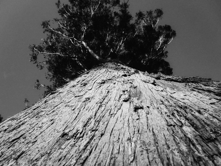 Tree Low Angle View Tree Trunk Day Nature Textured  Growth No People Outdoors Beauty In Nature Close-up