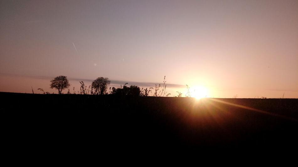 Tree Sunset Silhouette Rural Scene Sunlight Sun Flying Sky Landscape