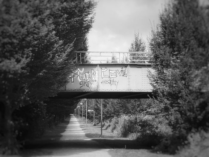 Bridge over canal amidst trees in forest