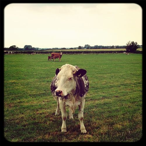 Last stop of the day on a cattle farm On-Location Factory Taking Photos Farm