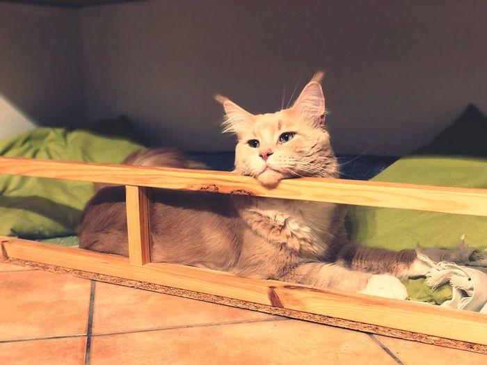 Non si chiama casa se non vi abita nemmeno un gatto 🐈 Follow4follow Followme Mainecoon Pets Cat Feline One Animal Domestic Animals Domestic Cat Domestic No People Kitten A New Beginning