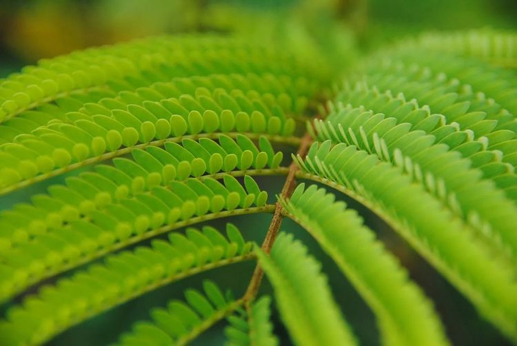 Plant Green Textures And Surfaces