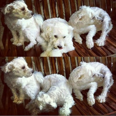 My furballs are ready for summer. Kultap 100happydaysJLR Day8