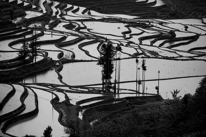 Nature Scenics Tranquil Scene Agriculture Beauty In Nature Terraced Field Landscape Water Outdoors No People Tranquility Rice Paddy Day EyeEmNewHere Beauty In Nature Landscape_Collection Tree Mountain Film Blackandwhite