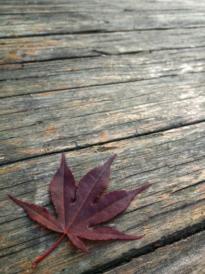 High angle view of maple leaf on wooden plank