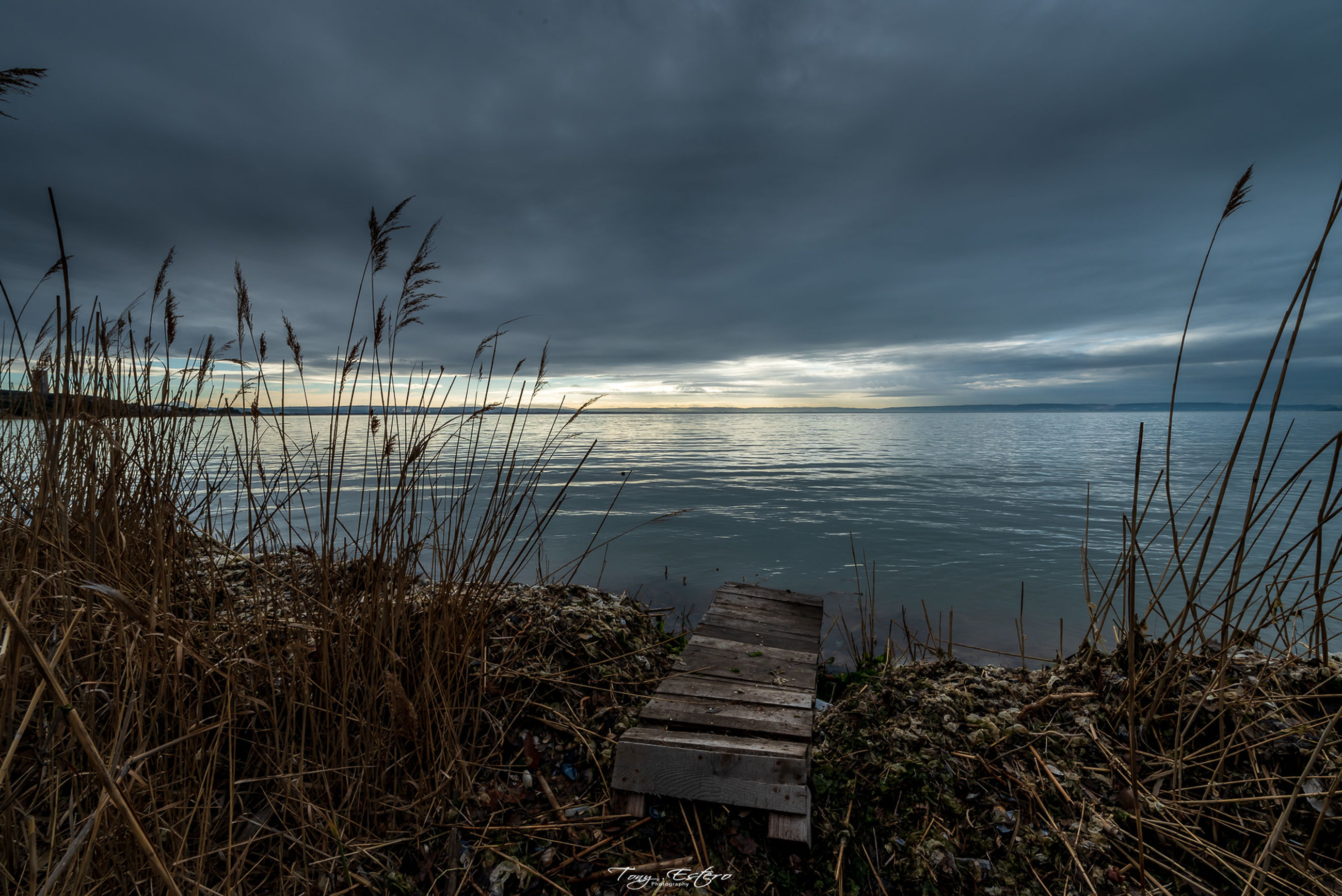 cloud - sky, sky, water, tranquility, beauty in nature, tranquil scene, plant, nature, scenics - nature, grass, sea, no people, land, beach, horizon, non-urban scene, growth, wood - material, horizon over water, outdoors, marram grass, timothy grass