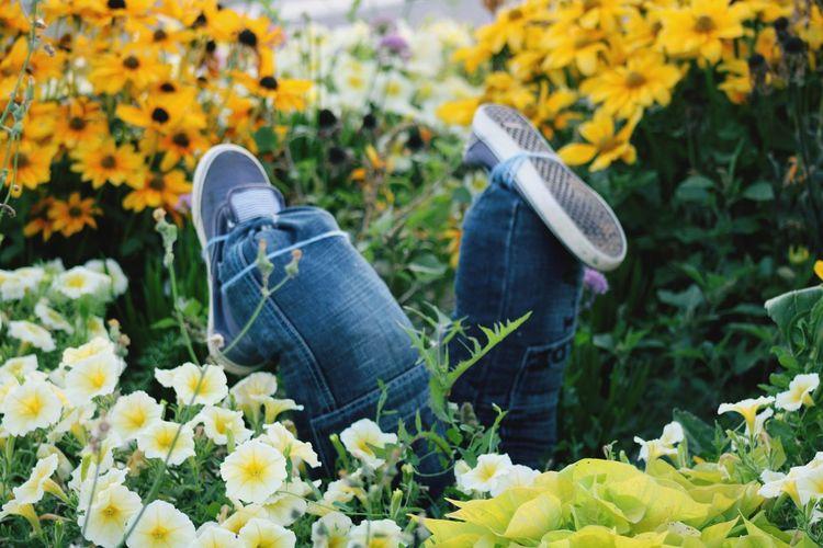 Scarecrow amidst flowering plants
