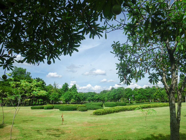 Beauty In Nature Cloud - Sky Day Environment Field Grass Green Color Growth Land Landscape Leisure Activity Nature Outdoors Plant Real People Scenics - Nature Sky Thai Garden Tranquil Scene Tranquility Tree