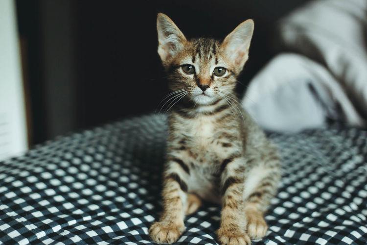 Portrait of kitten relaxing on bed