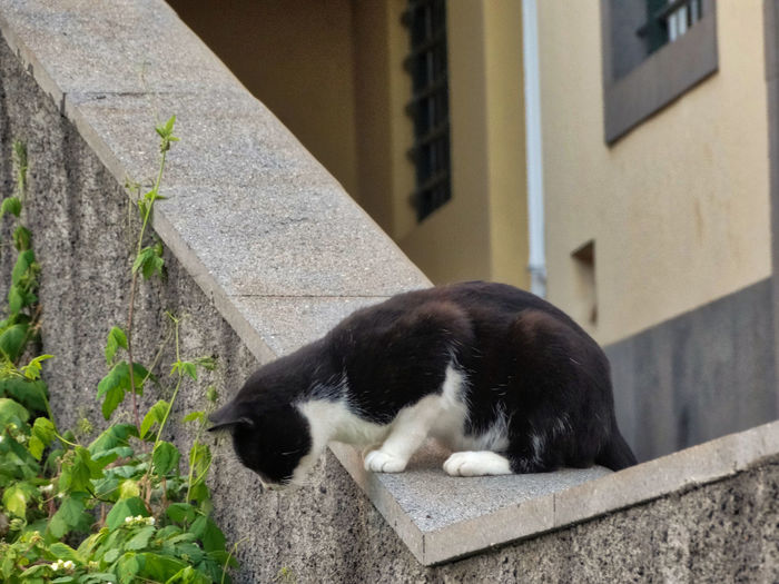 Cat looking in the grasslands. One Animal Mammal Animal Themes Animal Vertebrate Domestic Animals Domestic Pets Built Structure Architecture Cat Feline No People Domestic Cat Day Building Exterior Relaxation Wall Wall - Building Feature Black Color Outdoors Whisker Cats