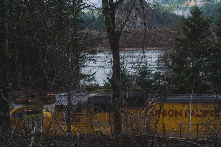 Oregon Pacific Northwest  Bare Tree Day Nature No People Outdoors Railroad Scenery Sky Train Tree Water
