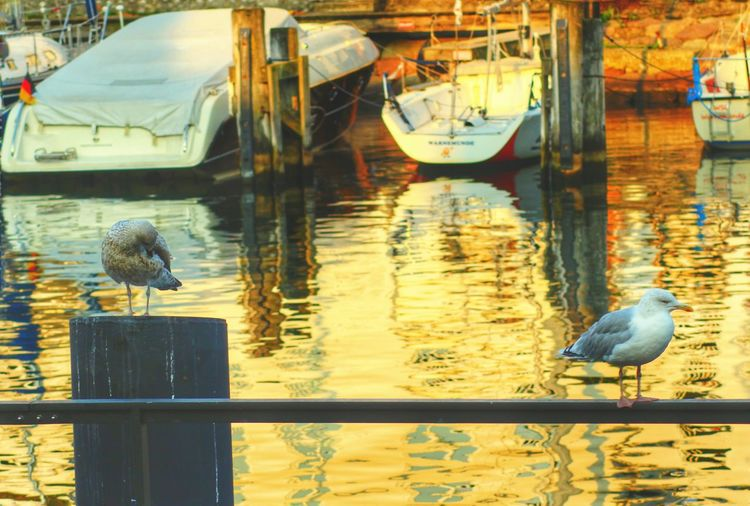 Birds at harbor