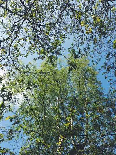 Springtime in paradise Tree Branch Nature Low Angle View Growth Beauty In Nature Forest No People Day Fresh New Canopy Freshness Sky Clear Sky Spring Greenery Leaves New Shoots