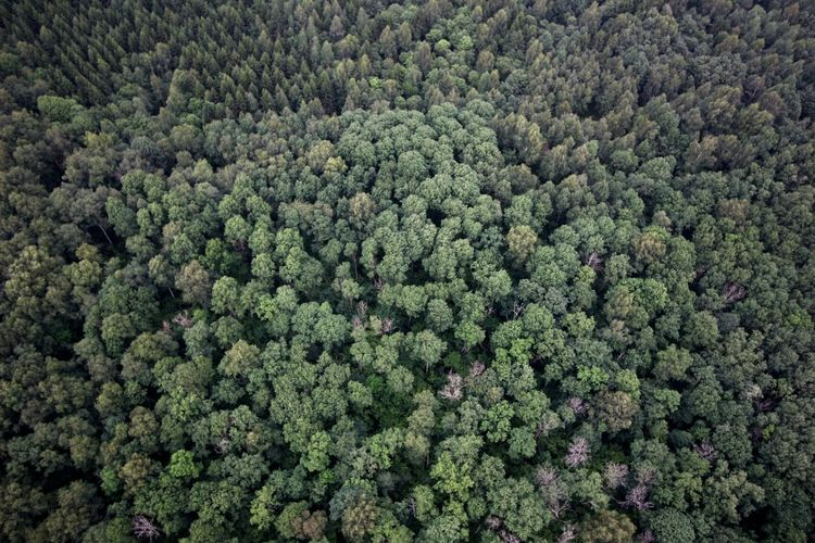 Trees Trees And Nature Wood WoodLand Forest Photography Forest Forest Trees View From Above View Into Land Drone Photography Droneshot Dronephotography From My Point Of View View From The Top View From Above  Earth_Collections Earth Beauty In Nature Nature_collection Forest Backgrounds Green Color Pine Tree Tree Area Pine Cone Pine Wood Spruce Tree Evergreen Tree Pine Woodland
