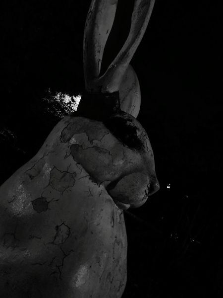 UnderSea Creepy Mammal Close-up Outdoors Night Nature Old Ruin Ancient History Travel History No People Travel Destinations EyeEmNewHere City Illuminated Whitestone