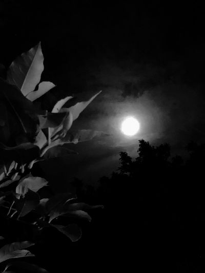 Adiós 2017... Best Eyem Photo Best EyeEm Shot The Week On EyeEm Moon Nature Night Beauty In Nature Growth Plant Outdoors No People Sky Moonlight