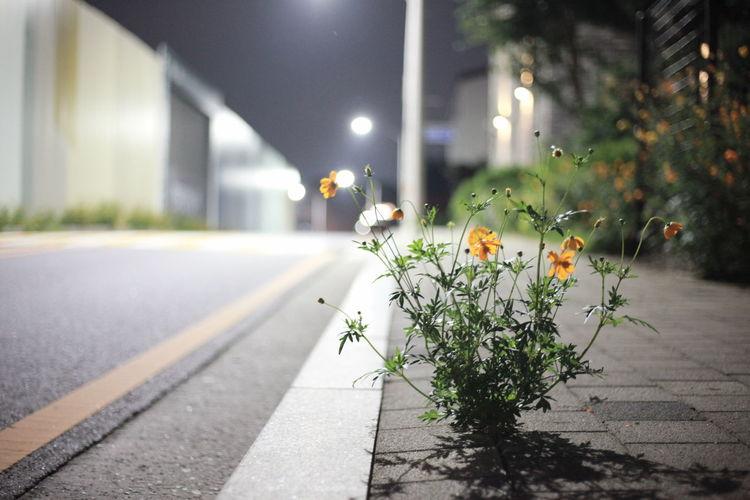 View of flowering plants on road