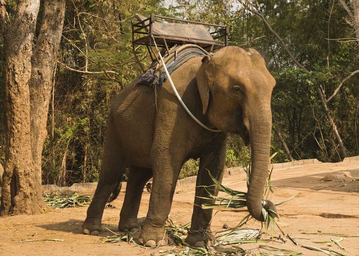 Animal Animal Themes Animal Wildlife Animals In The Wild Beauty In Nature Day Elephant Forest Indian Elephant Nature No People One Animal Outdoors Standing Tree
