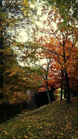 Traveling Taking Photos Boston, Massachusetts Fall Colors